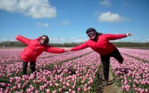 Viaggi in bici: fuga di primavera in Olanda, tra i tulipani in fiore