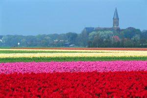 Ciclovacanza di primavera: in Olanda, nell'arcobaleno dei tulipani