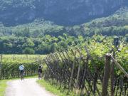 In bici tra i vigneti della Vallagarina