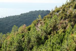 Ottovolante Italia: 10 bike park in cui lanciarsi tra Alpi e Appennini