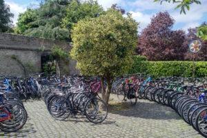 Bikeen, da una startup l'e-commerce delle bici usate