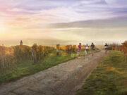 strade del vino in Moravia