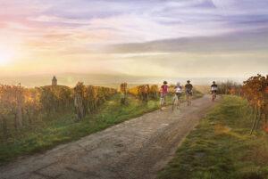Repubblica Ceca in bicicletta: strade del vino e altri tesori della Moravia